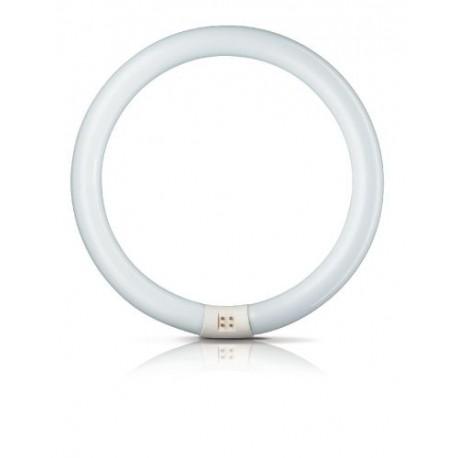 Świetlówka kołowa Philips Master TL-E Circular Super 80 865 G10Q 22 W