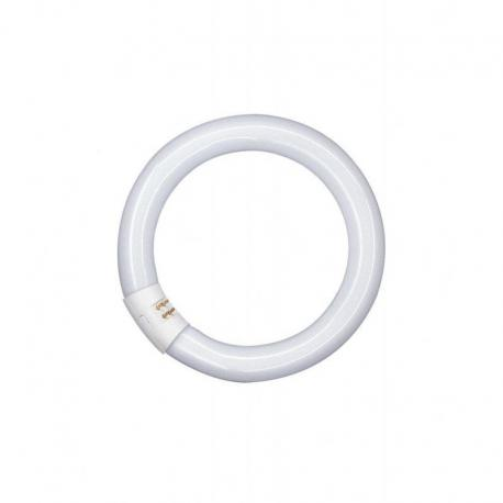 Świetlówka okrągła o średnicy 29mm, z trzonkiem G10Q LUMILUX® T9 C 32 W/865 G10Q 6szt.